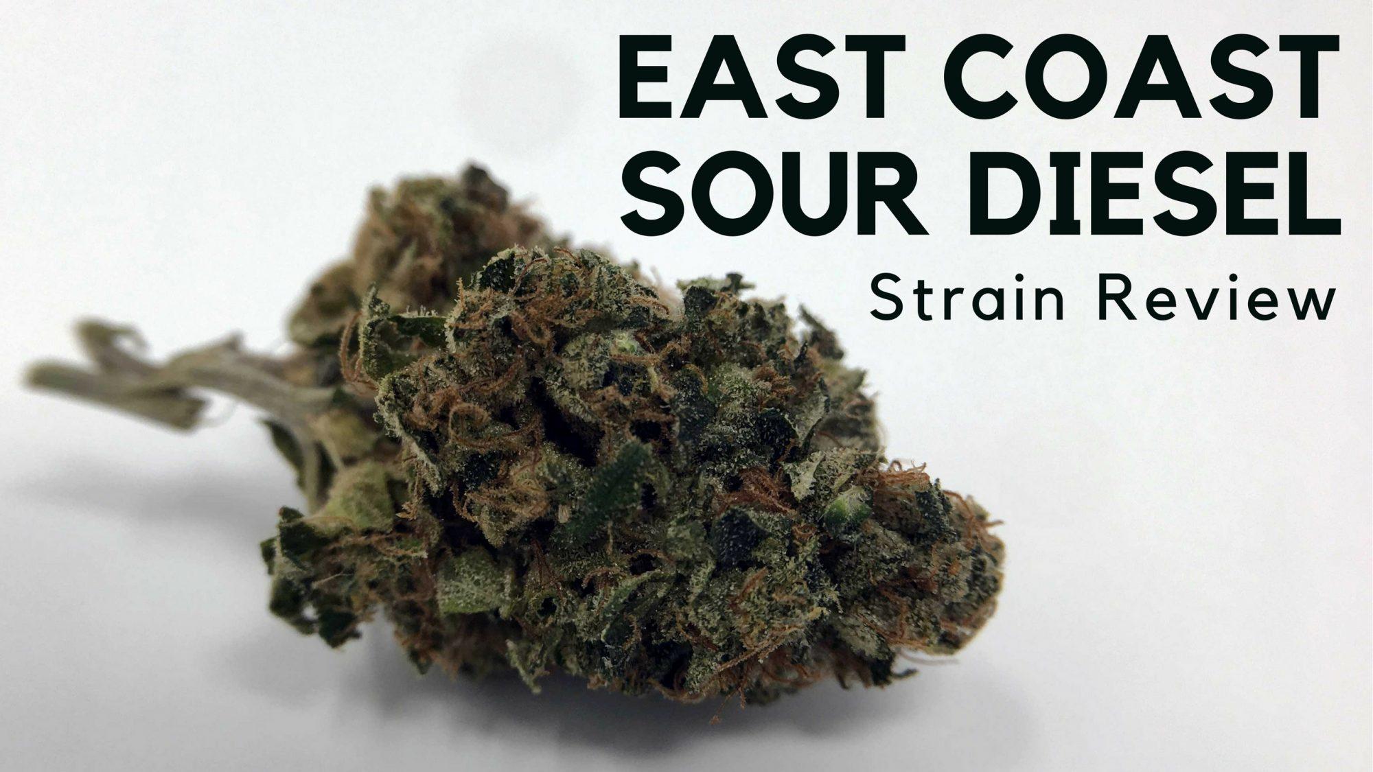 East Coast Diesel >> East Coast Sour Diesel Cannabis Strain Information Review