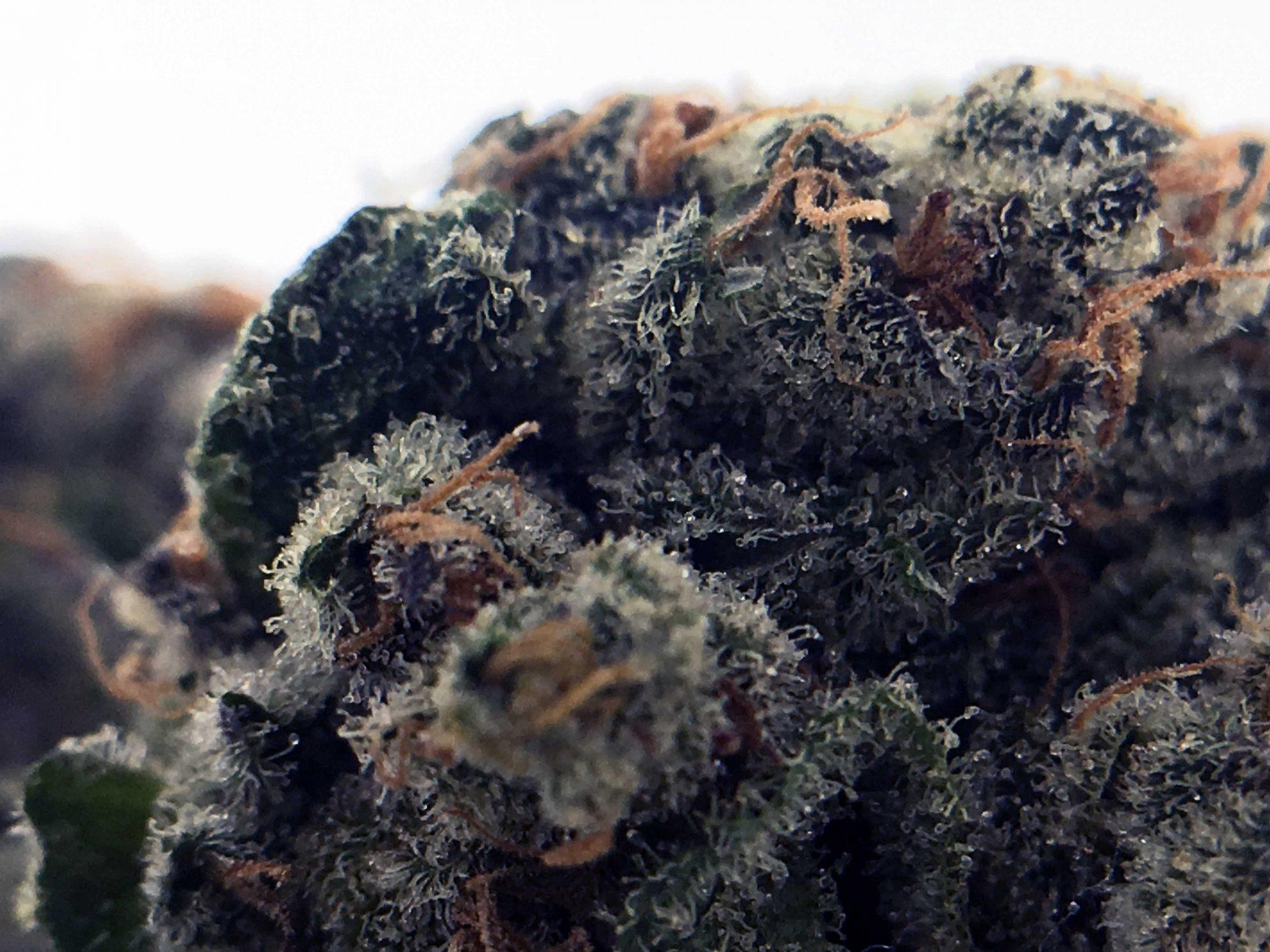 Sour Power OG, Sour Power OG Cannabis Strain Information & Review