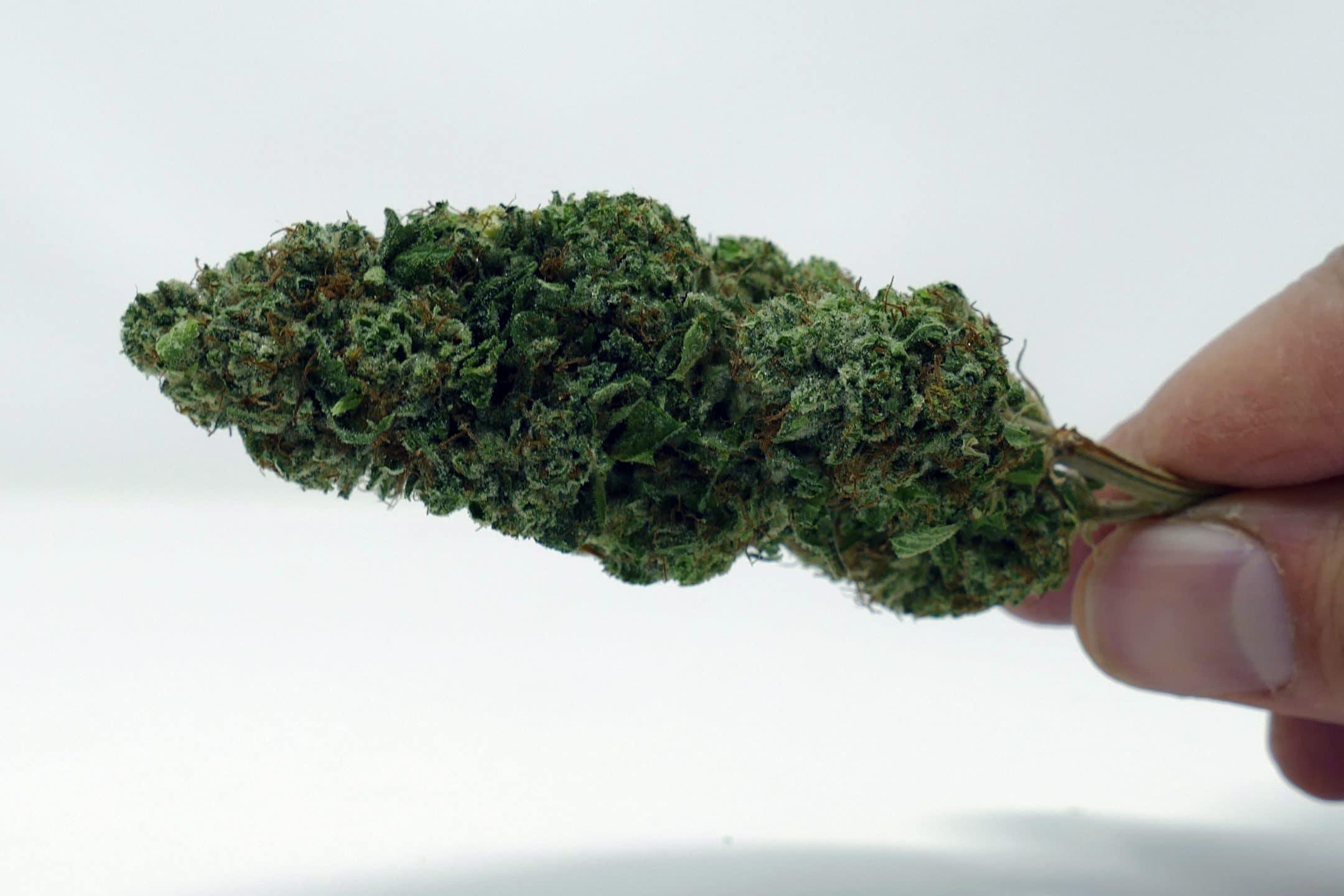 marmalade, Marmalade Cannabis Strain Review & Information